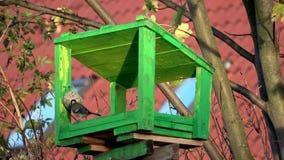 Tits dzióbać na adrze w ptasim dozowniku Mali ptaki dzióbać ziarna zdjęcie wideo