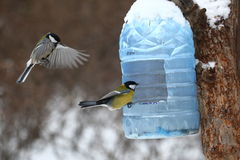 Tits feeding in winter Royalty Free Stock Images