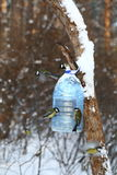 Tits feeding in winter Stock Photo