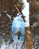 Tits feeding in winter Royalty Free Stock Photography