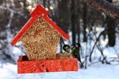 Tits feeding in winter Royalty Free Stock Photos