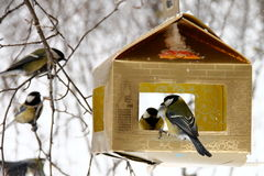 Tits feeding in winter. Hungry tits eating seeds from feeder Royalty Free Stock Photos