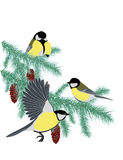 Tits on fir branches Stock Images