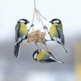 Tits w zimie latać i siedzieć na dozowniku obraz stock