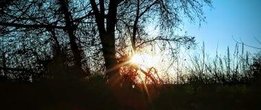 Titt a buar solstjärnan royaltyfri bild