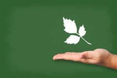 Tiza drenada hojas en la pizarra con la mano. Fotos de archivo