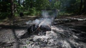 Tizzoni dal fuoco in natura stock footage