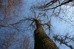 Tjänstledighet-mindreträd Royaltyfri Bild