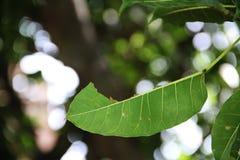 Tjänstledigheter för grön färg för växt halva royaltyfria bilder