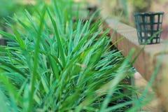 Tjänstledigheter för naturfotografigräsplan i barnkammare Arkivbilder