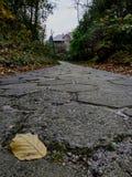Tjänstledigheter på vägen och de gråa himlarna royaltyfri fotografi