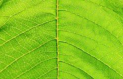 Tjänstledigheter Textture - abstrakt konst inom naturen - grön bakgrund Royaltyfria Bilder
