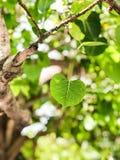 Tjänstledigheterna av trädet royaltyfri foto