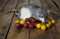 Tjalla och körsbärsröda tomater Arkivfoto