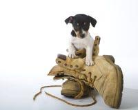 Tjalla Terriervalpen Arkivbilder