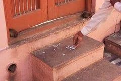 Tjaller erbjudande mat för mannen för, Karni Mata Temple, Deshnok, Indien royaltyfria foton