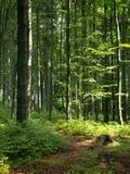 tjeckisk skog Royaltyfri Fotografi