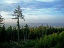 tjeckisk skog Arkivfoton