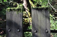 tjeckisk skog switzerland Fotografering för Bildbyråer