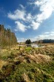 Tjeckiskt vårlandskap med dammet Royaltyfri Foto
