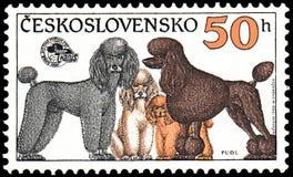 TJECKOSLOVAKIEN - CIRCA 1990: stämpla utskrivavet i Tjeckoslovakien, shower pudlar av olika avel, utställning för serievärldshund royaltyfri illustrationer