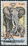 TJECKOSLOVAKIEN - 1976: showelefanter, afrikanska djur för serie i den Dvur Kralove zoo Arkivfoto
