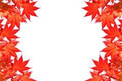 Tjänstledigheter för röd lönn av den färgrika hösten med utrymme för text eller symbol Fotografering för Bildbyråer