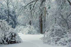 Tjock blandad skog - buskar, träd och granar som täckas med snö, snö-täckt landskap royaltyfria bilder