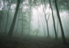 Tjock dimma i en mörk mystisk spöklik skog Royaltyfria Bilder