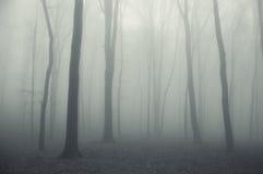 Tjock dimma i en spöklik mörk skog i vinter royaltyfria foton