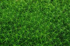 Tjock grön mossa i skogtexturen Arkivbilder