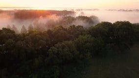 Tjock morgondimma över floden och ängen Flyga över mistlandskapet lager videofilmer