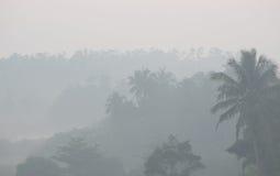 Tjock morgondimma i tropiskt gömma i handflatan djungeln royaltyfria foton