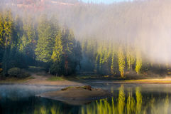 Tjock morgondimma på sjön i prydlig skog Fotografering för Bildbyråer