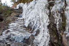 Tjock is på smal fotvandra slinga royaltyfri bild