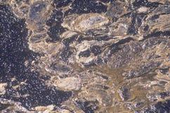 Tjock råolja som överst svävar av havvatten på Huntington Beach efter en oljeutsläpp av kusten av det orange länet, Kalifornien Royaltyfria Foton