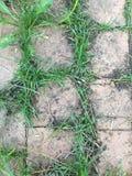 Tjock skiva & gräs Royaltyfri Fotografi