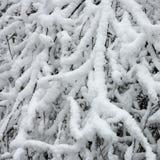 Tjock snö ackumulerar på filialer av träd royaltyfri bild
