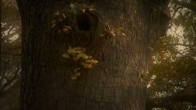 Tjock stam, frodigt ginkgoträd i bris, stam, skog, trän lager videofilmer