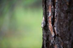Tjock trädstam Royaltyfria Bilder