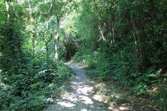 Tjocka gröna busksnår av träd i det naturligt parkerar av Krka Kroatien arkivfoton