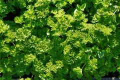 Tjockt frodiga gröna växter Fotografering för Bildbyråer