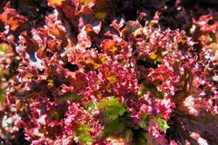 Tjockt frodiga gröna växter Royaltyfria Foton