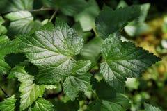 Tjockt frodiga gröna växter Arkivfoto