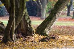Tjockt träd i parkera Arkivfoto