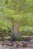 Tjockt träd med gräsplansidor och blommor i trädgårds- säng Royaltyfri Fotografi