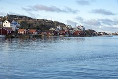 Tjornekalv at Swedish west coast in winter stock photo