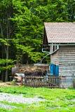 Tjur på lantgården i stallen royaltyfria foton