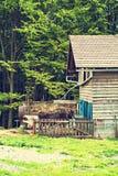 Tjur på lantgården i stallen arkivfoton