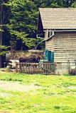 Tjur på lantgården i stallen royaltyfri bild